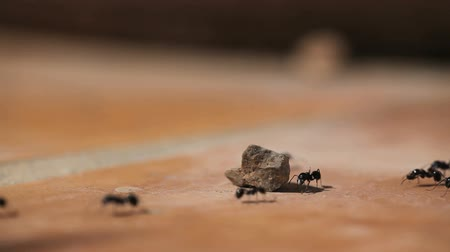 управление : Ants running on stone ground