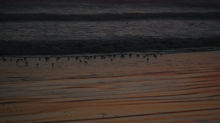 Тихий океан : Slowmotion birds at sunset on the beach and tide waves at the pacific ocean