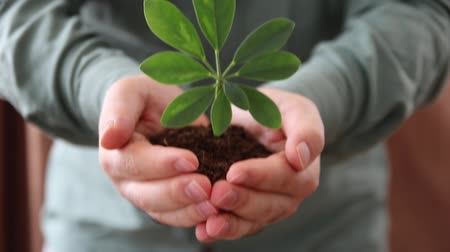 fragilidade : Handful of Soil with Young Plant Growing Vídeos
