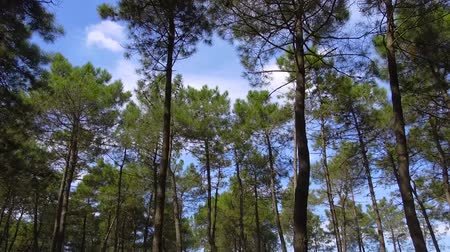inspirar : Green Jungle Trees and Palms Against Blue Sky and Shining Sun Stock Footage
