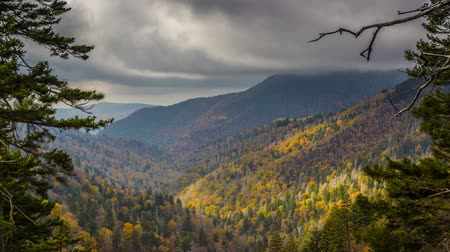 füstös : Great Smoky Mountains National Park in Tennessee, USA Stock mozgókép