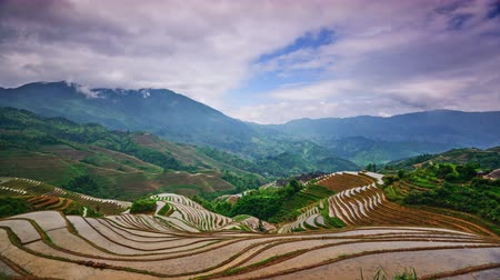 dazhai : Rice Terraces in Dazhai Village, Guangxi Province, China.
