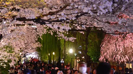 walkthrough : KYOTO, JAPAN - CIRCA APRIL 2014: Crowds throng at the Shirakawa district at night during the spring season. The annual cherry blossoms brings out large amounts of sightseers.