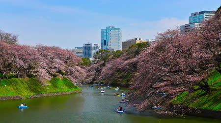 yoshino river : Tokyo, Japan at Chidorigafuchi Moat in the spring.