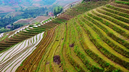 guangxi : Guilin, China rice terraces.