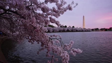 anıt : Washington DC at the Tidal Basin and Washington Monument in spring.
