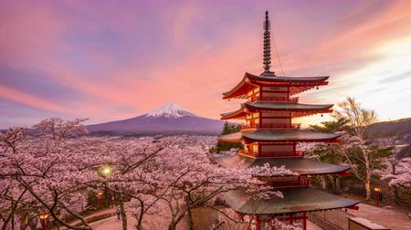 Fujiyoshida, Japan at Chureito Pagoda and Mt. Fuji in the spring with cherry blossoms. Wideo