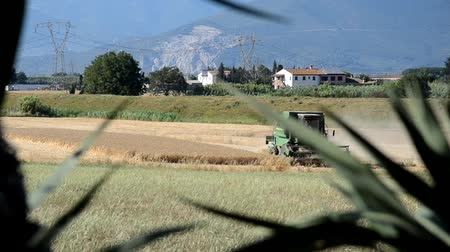 Combine harvest barley in the countryside