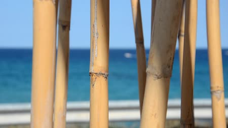View of bamboo canes that play in the wind
