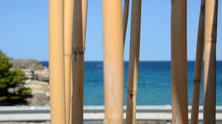 View of bamboo canes that sway to the wind
