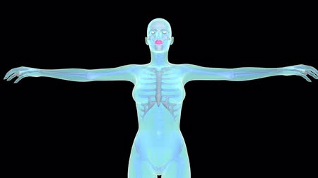 humans : skeleton female body with black background