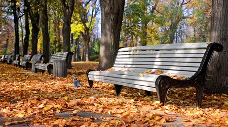 folhas : Falling leaves in autumn city park, autumn