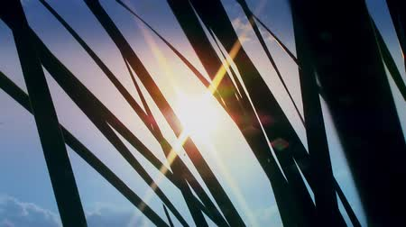kapradina : sunset light shine through grass close up new quality nature scenic view video footage