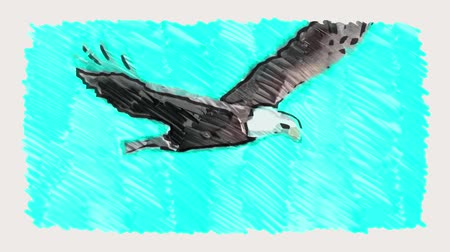 sas : marker drawn bald eagle sky fly stop motion cartoon animation seamless loop - new quality nature animals handmade retro vintage colorful video footage