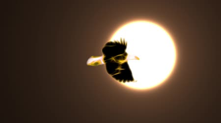 égés : golden yellow Neon bald Eagle fly in sun light cartoon seamless loop animation on black background - new quality unique handmade dynamic joyful colorful video animal bird footage