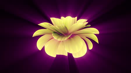 perfumy : opening long blooming shiny light yellow flower time-lapse 3d animation isolated on background new quality beautiful holiday natural floral cool nice 4k video footage