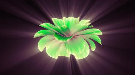 trvalka : opening long blooming shiny light green flower time-lapse 3d animation isolated on background new quality beautiful holiday natural floral cool nice 4k video footage