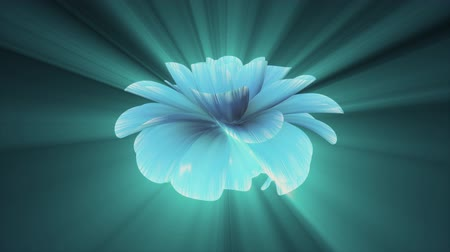 piwonia : opening long blooming shiny light blue purple flower time-lapse 3d animation isolated on background new quality beautiful holiday natural floral cool nice 4k video footage Wideo