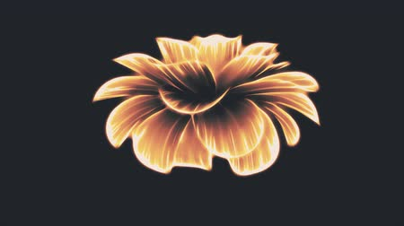 seqüência : opening long blooming orange neon flower time-lapse 3d animation isolated on background new quality beautiful holiday natural floral retro vintage cool nice 4k video footage