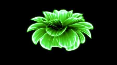 fragrância : opening long blooming green neon flower time-lapse 3d animation isolated on background new quality beautiful holiday natural floral retro vintage cool nice 4k video footage