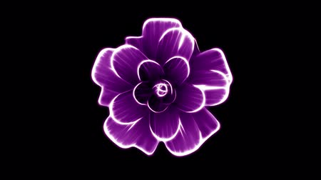 fragrances : opening long blooming purple flower time-lapse 3d animation isolated on background new quality beautiful holiday natural floral cool nice 4k video footage Stock Footage