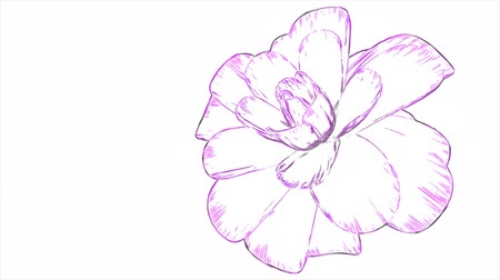szag : cartoon drawn opening long blooming flower time-lapse animation isolated on background new quality beautiful holiday natural floral cool nice 4k video footage