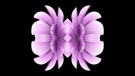 kalejdoskop : ornamental blooming flower kaleidoscope moving pattern animation background - New quality holiday shape colorful universal motion dynamic animated joyful cool nice music video footage