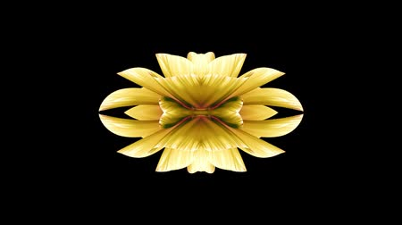rosa : ornamental blooming flower kaleidoscope moving pattern animation background - New quality holiday shape colorful universal motion dynamic animated joyful cool nice music video footage