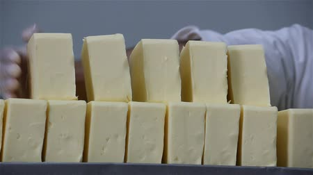 sýr : Production Of Hard Cheese Man Rarer Cheese close up 30Fps The process of making cheese in a factory. Packing cheese in a dairy factory. Dostupné videozáznamy