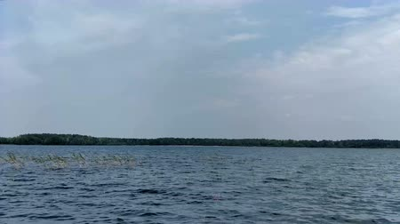 Wave on the lake with flying gull in dark summer day Stockvideo