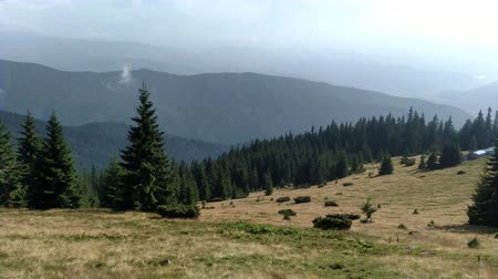 karpatské : Spruce mountains and sky Environment in sunny day ature in the Carpathians Green color landscape nature