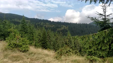 Slow motion of clouds Spruce mountains and sky Environment in sunny day ature in the Carpathians Green color landscape nature