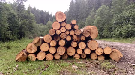 de ativos : Spruce logs are harvested and prepared for transportation in Karpathians forest Pine trees trunks felled timber industry Landscape with large woodpile nature
