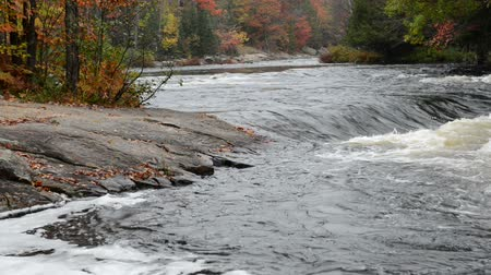mrożonki : Small rapids and colorful autumn forest at Oxtongue river, Muskoka, Canada