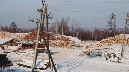 sawn : logging in the winter in Siberia