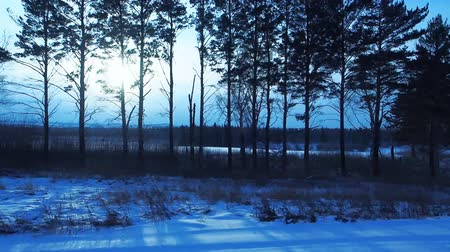 tampado : winter landscape at dawn, the forest and river