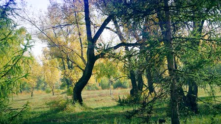 landscape in the Park on an autumn day.