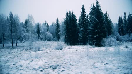 driving plate : view of the winter forest from the window of a moving train.