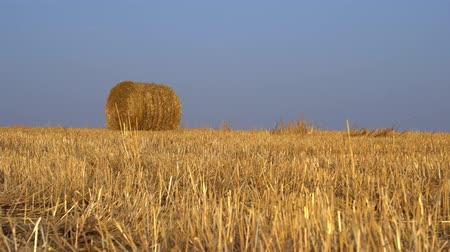 hayloft : The field with hay rolled into bales. Agriculture farming concept. Ultra HD
