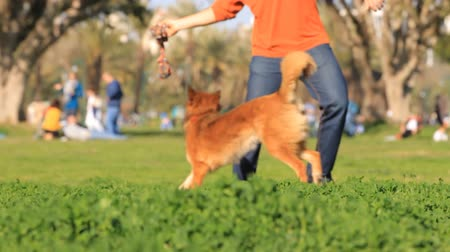 corrida : Man and dog playing in the park. Slow motion