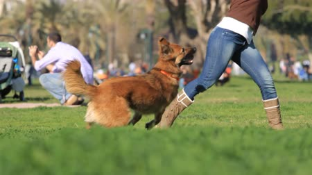 köpek yavrusu : Woman and dog playing in the park. Slow motion