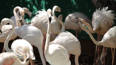 flaming : Group of flamingo in the zoo