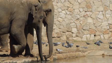 powerful : Elephants drinks in the safari. Israel