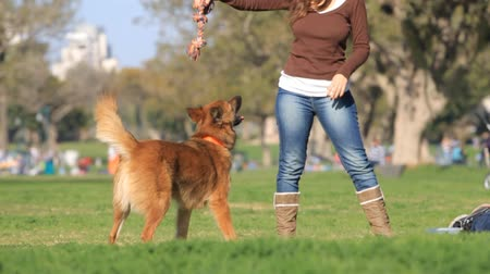 kürk : Woman and dog playing in the park Stok Video