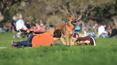 cachorro : Woman, man and dog playing in the park