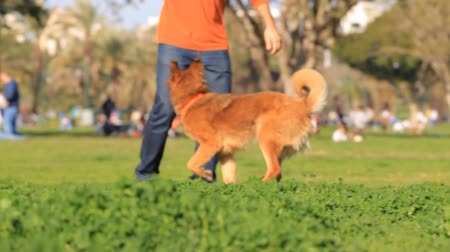playing with a dog : Man and dog playing in the park Stock Footage