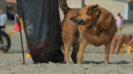 tlapky : Dog on the beach looking for food in garbage