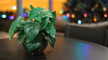 tablo : Christmas interior with plant on the table and christmas tree background Stok Video