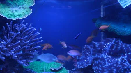 korál : Aquarium with exotic fish