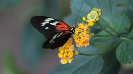 insetos : Butterfly on a flower in garden